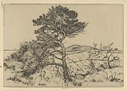 Popham Pines