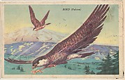 Bird (Falcon), bakery card from the California Bird Pictures series (D39-2), issued by the Gordon Bread Company