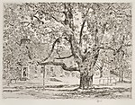 The Big Horse Chestnut Tree, Easthampton