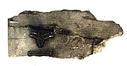 Fragment of an ivory tag