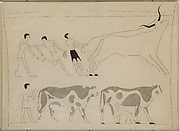Men Roping a Bull and Driving Cattle, Tomb of Djari