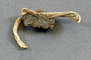 Mud Sealing Attached to a Fiber Tie from Tutankhamun's Embalming Cache