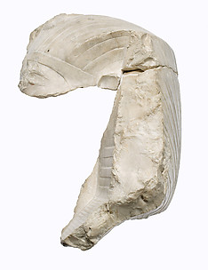 Head of Akhenaten