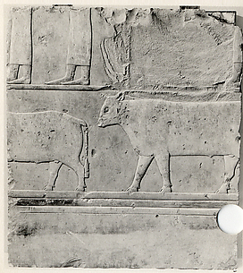 Relief of female attendants and oxen - see 26.3.353-3