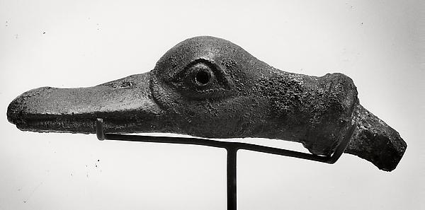 Duck's head