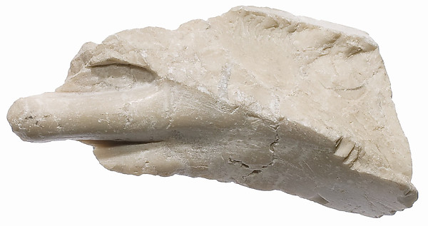 Foot fragment