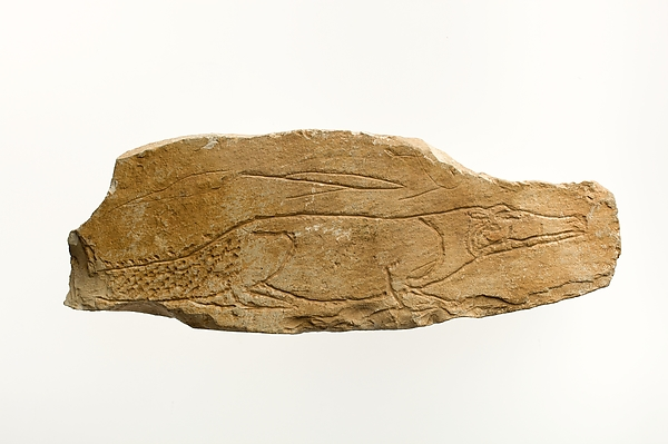 Ostracon with sketch of a crocodile