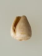 Shell pendant or bead