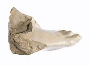 Right foot and leg of Akhenaten or Nefertiti prostrate