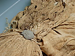 Linen bundle and sealing with the name Nebkheperure (Tutankhamun)