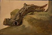 Chestnut Limb, Ischia