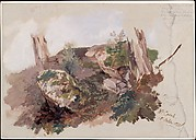 Study of Rocks, Shrubs, and Tree Trunks at Monte Casale near Sansepolcro, Tuscany