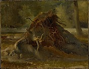 Study of the Roots of a Fallen Tree