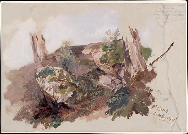 Study of Rocks, Shrubs, and Tree Trunks at Monte Casale near Sansepolcro, Tuscany