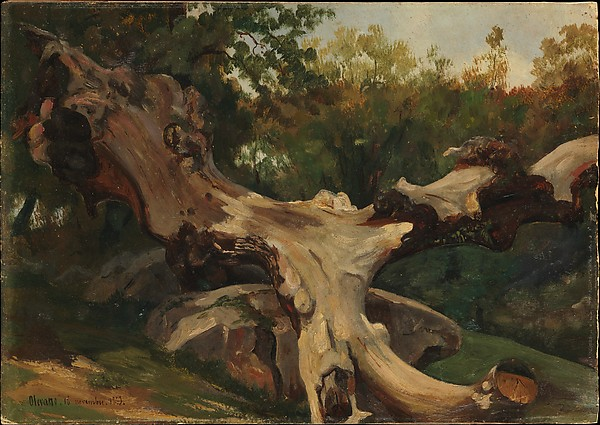 Uprooted Tree at Olevano Romano