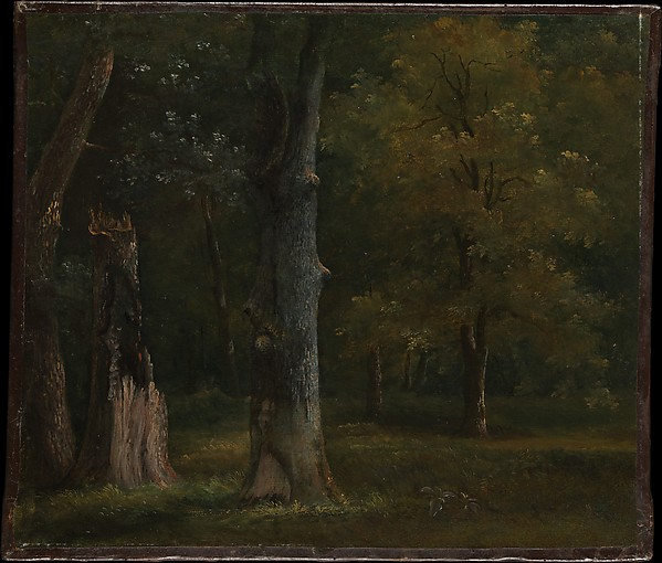 Trees in the Bois de Boulogne, Paris