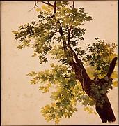 Study of a Tree Limb