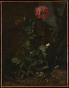 Still Life with Poppy, Insects, and Reptiles