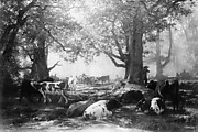 Environs of Fontainebleau: Woodland and Cattle