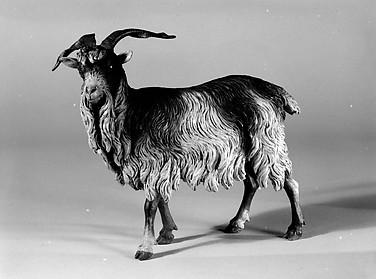 Male adult goat