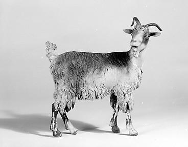 Female adult goat