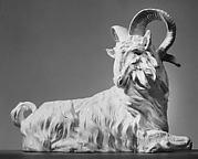 Reclining goat