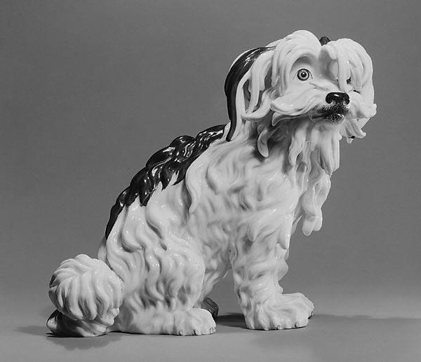 Bolognese Terrier