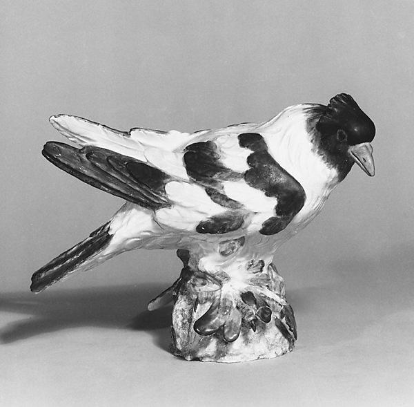 Pigeon (Trommeltaube)