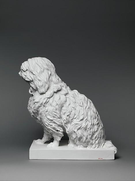 Musette, a Maltese dog