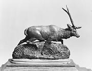 Java Deer