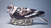 Nesting pigeon
