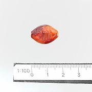 Seal, amygdaloid