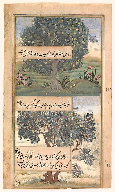 """Three Trees of India"", Folio from a Baburnama (Autobiography of Babur)"