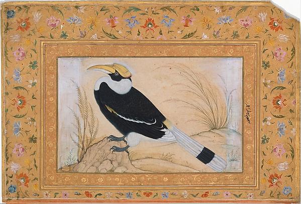 """Great Hornbill"", Folio from the Shah Jahan Album"
