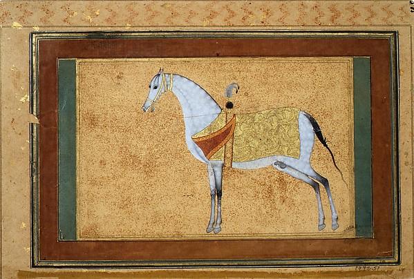 A Stallion