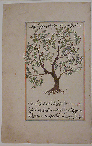 Folio from a Materia Medica of Dioscurides