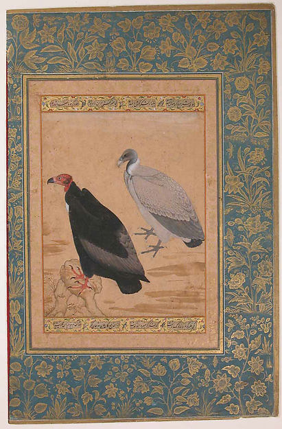 """Red-Headed Vulture and Long-Billed Vulture"", Folio from the Shah Jahan Album"