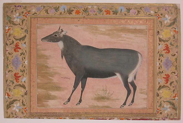 """Study of a Nilgai (Blue Bull)"", Folio from the Shah Jahan Album"