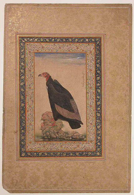 """Red-Headed Vulture"", Folio from the Shah Jahan Album"