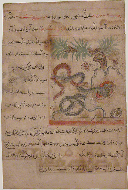 """Pair of Serpents"", Folio from a Manafi' al-Hayawan (On the Usefulness of Animals) of Ibn Bakhtishu'"