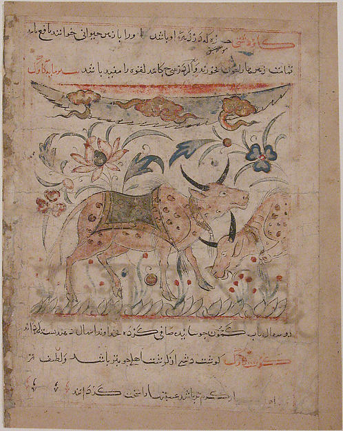 """Oxen amongst Foliage"", Folio from a Manafi' al-Hayawan (On the Usefulness of Animals) of Ibn Bakhtishu'"