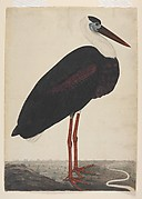 Black Stork in a Landscape