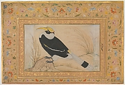 """Great Hornbill"", Folio from the Shah Jahan Album"