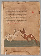 """Kalila and Dimna Discussing Dimna's Plans to Become a Confidante of the Lion"", Folio from a Kalila wa Dimna"