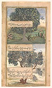"""Three Trees of India"", Folio from a Baburnama (Autobiography of Babur)"