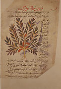 Folio from the De Materia Medica of Dioscorides