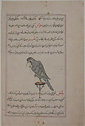 """Hawk on Perch"", Folio from a Bestiary and Herbal"