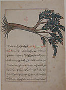 Folio from a Bestiary and Herbal