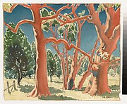 Cabbage Gums and Cypress Pines