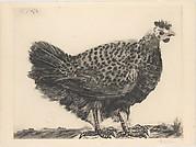 The Hen
